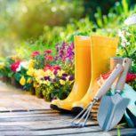 Medi Sydney Hill Garden – باغبانی و هرس درختان
