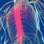 Spine Chiropractic Meadowbank – کایروپرکتور